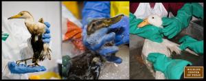 trio oil spill workshop
