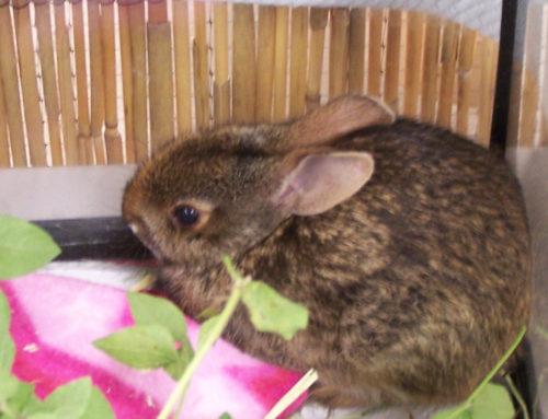 Bunnies Hop to the Wildlife Center