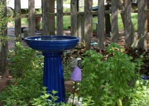 blue bird bath